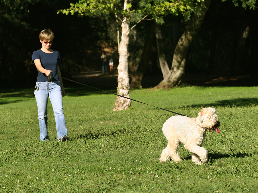 Woman walking with her dog in the park